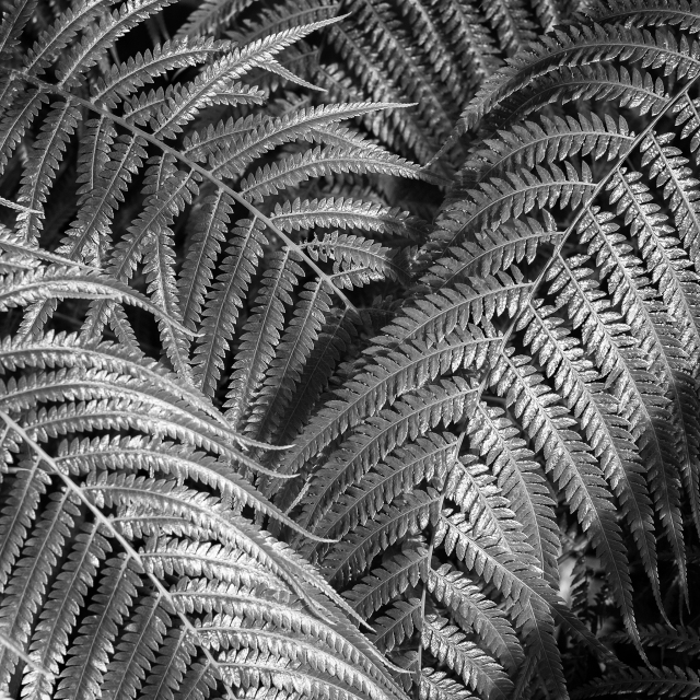 botanics-9