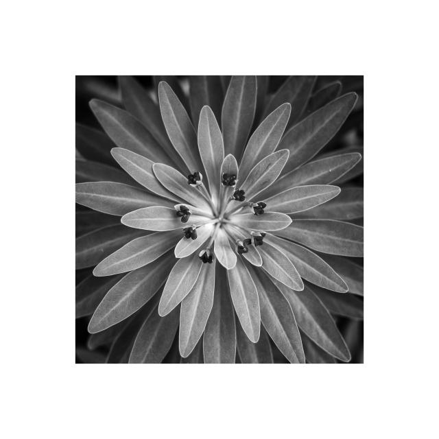 Botanics2-23