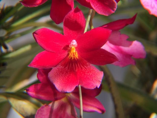 botanic-2