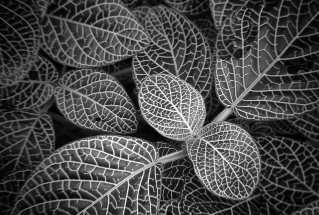 botanic-3